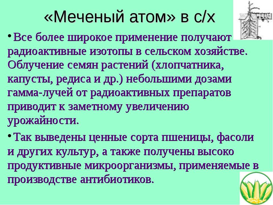 «Меченый атом» в с/х Все более широкое применение получают радиоактивные изот...