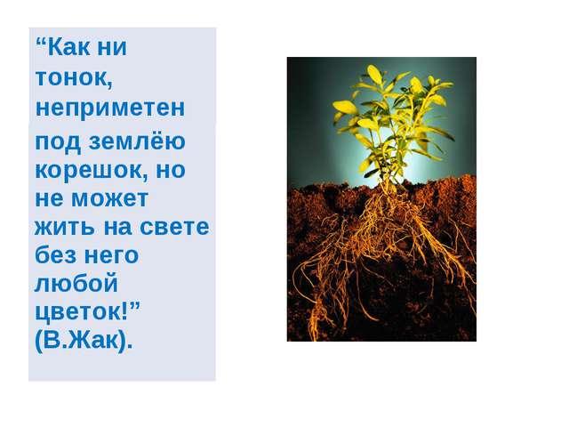 """""""Как ни тонок, неприметен под землёю корешок, но не может жить на свете без н..."""
