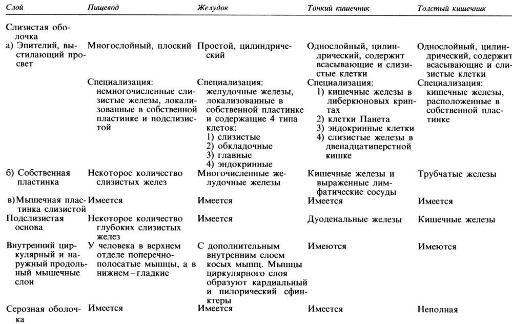 Таблица 10.9. Сравнение структуры основных отделов пищеварительного тракта человека
