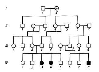 Пример родословной