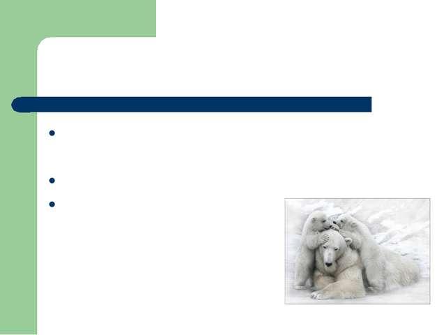 Признаки группы зверей: Тело состоит из головы, туловища, 4 лап, хвоста. Тел...