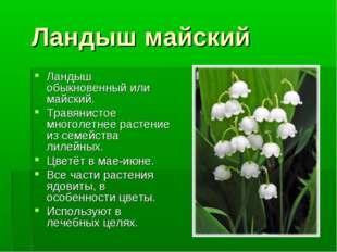 Ландыш майский Ландыш обыкновенный или майский. Травянистое многолетнее раст
