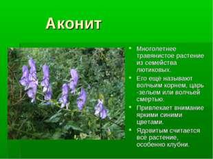 Аконит Многолетнее травянистое растение из семейства лютиковых. Его ещё назы