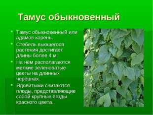Тамус обыкновенный Тамус обыкновенный или адамов корень. Стебель вьющегося р