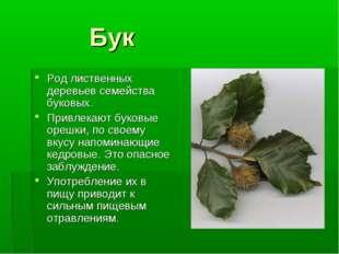 Бук Род лиственных деревьев семейства буковых. Привлекают буковые орешки, по