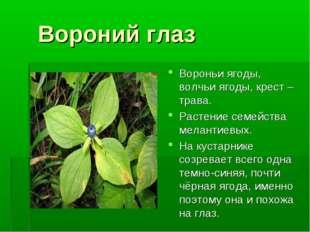 Вороний глаз Вороньи ягоды, волчьи ягоды, крест – трава. Растение семейства