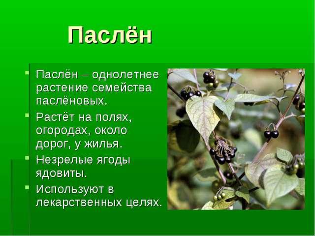 Паслён Паслён – однолетнее растение семейства паслёновых. Растёт на полях, о...