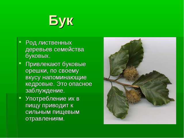 Бук Род лиственных деревьев семейства буковых. Привлекают буковые орешки, по...