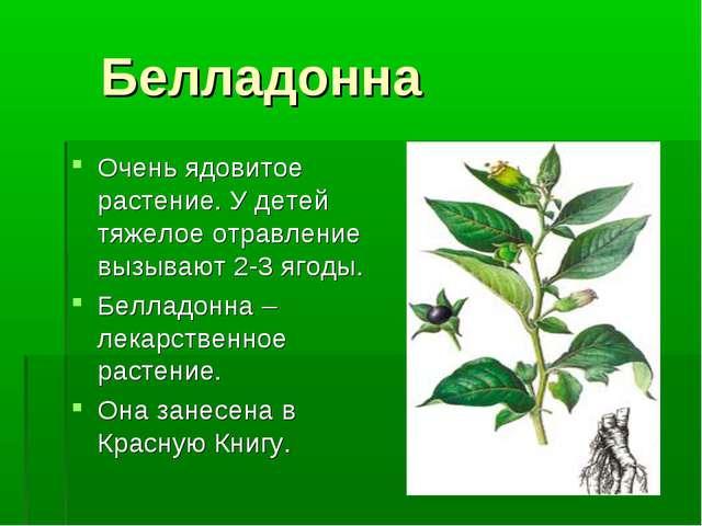 Белладонна Очень ядовитое растение. У детей тяжелое отравление вызывают 2-3...