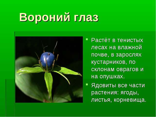 Вороний глаз Растёт в тенистых лесах на влажной почве, в зарослях кустарнико...