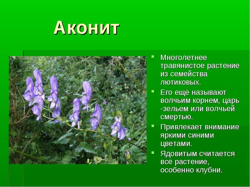 Аконит Многолетнее травянистое растение из семейства лютиковых. Его ещё назы...