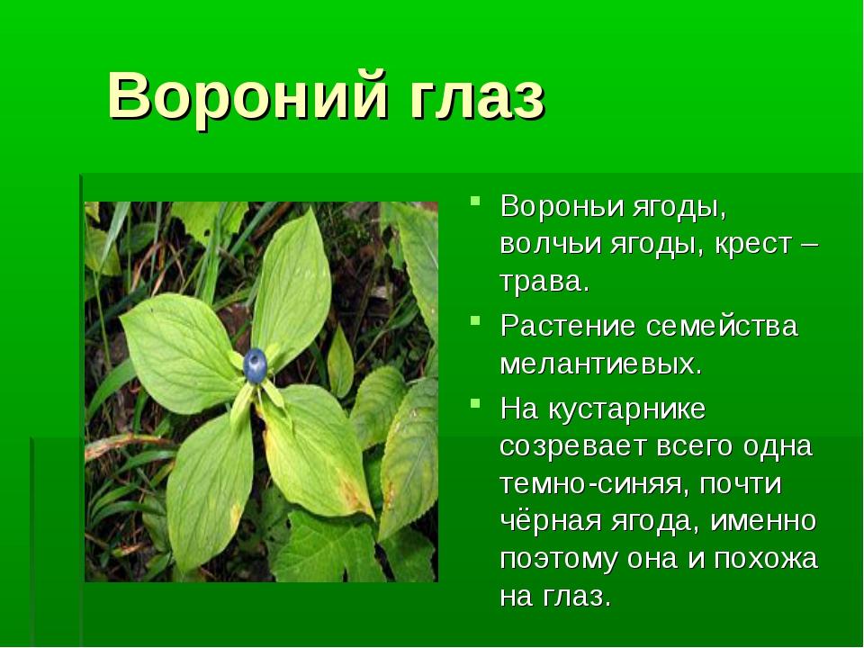 Вороний глаз Вороньи ягоды, волчьи ягоды, крест – трава. Растение семейства...
