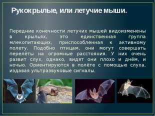 Рукокрылые, или летучие мыши. Передние конечности летучих мышей видоизменены