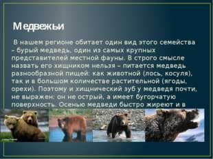 Медвежьи В нашем регионе обитает один вид этого семейства – бурый медведь, од