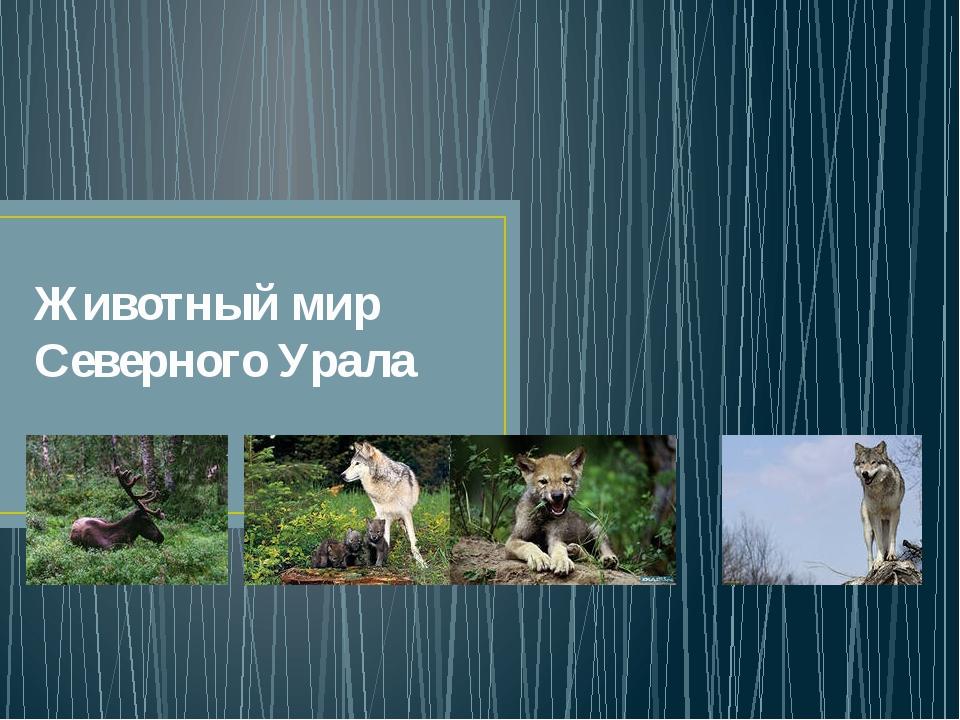 Животный мир Северного Урала