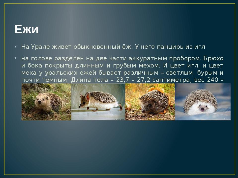 Ежи На Урале живет обыкновенный ёж. У него панцирь из игл на голове разделён...