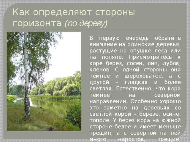 Как определяют стороны горизонта (по дереву) В первую очередь обратите вниман...