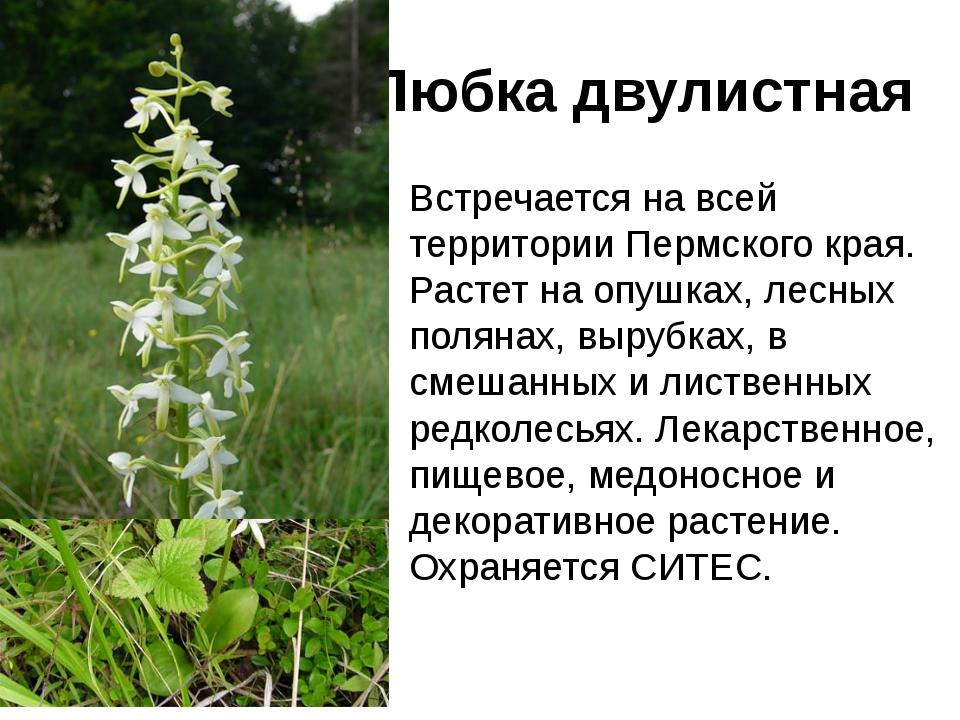 животные и растения пермского края с картинками постараюсь
