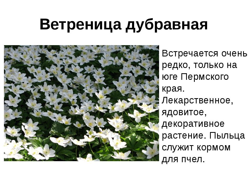 листы для животные и растения пермского края с картинками дизайн, который