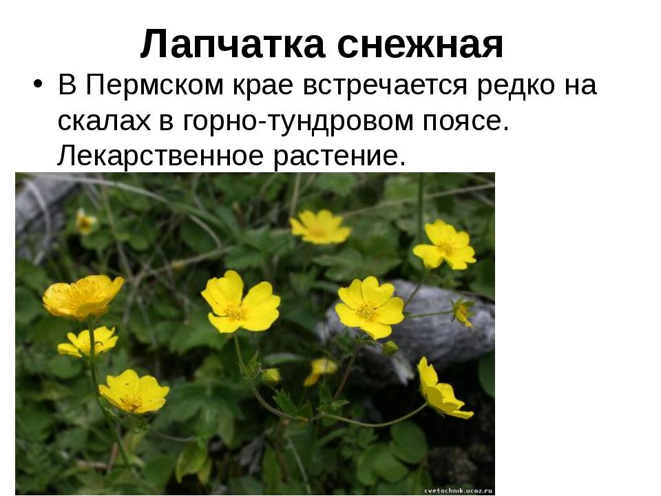 Животные и растения пермского края с картинками
