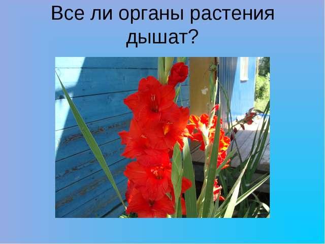 Все ли органы растения дышат?