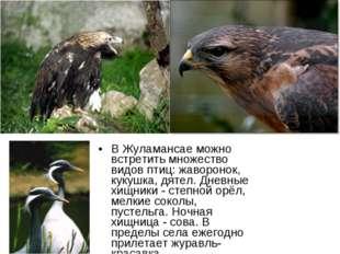 В Жуламансае можно встретить множество видов птиц: жаворонок, кукушка, дятел.