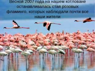 Весной 2007 года на нашем котловане останавливалась стая розовых фламинго, ко