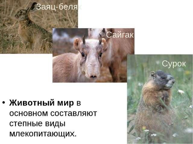 Животный мир в основном составляют степные виды млекопитающих. Заяц-беляк Сай...