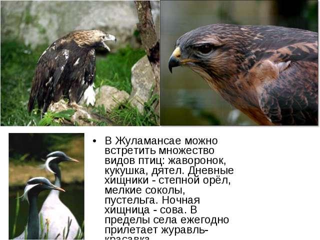 В Жуламансае можно встретить множество видов птиц: жаворонок, кукушка, дятел....