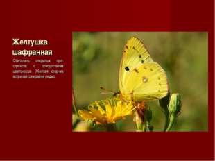 Желтушка шафранная Обитатель открытых про-странств с присутствием цветоносов.