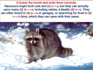 5.Guess the words and write them correctly. Raccoons might look cute and (1)
