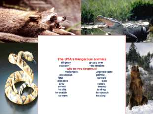 The USA's Dangerous animals alligator grizzly bear raccoon rattlesnakes Why