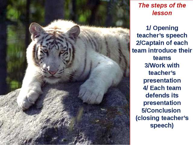 The steps of the lesson 1/ Opening teacher's speech 2/Captain of each team in...