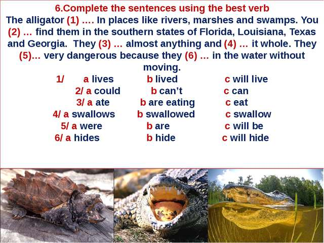 6.Complete the sentences using the best verb The alligator (1) …. In places l...