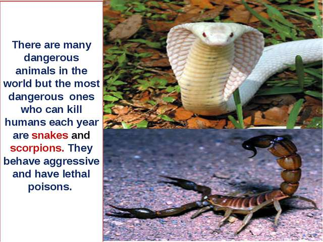There are many dangerous animals in the world but the most dangerous ones who...