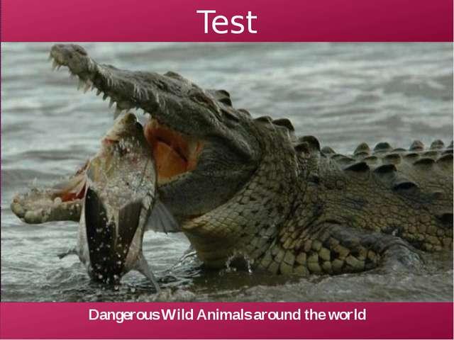 Test Dangerous Wild Animals around the world