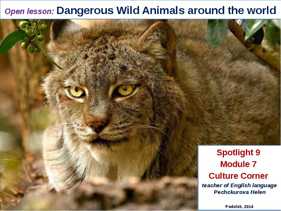 Open lesson: Dangerous Wild Animals around the world Spotlight 9 Module 7 Cul...