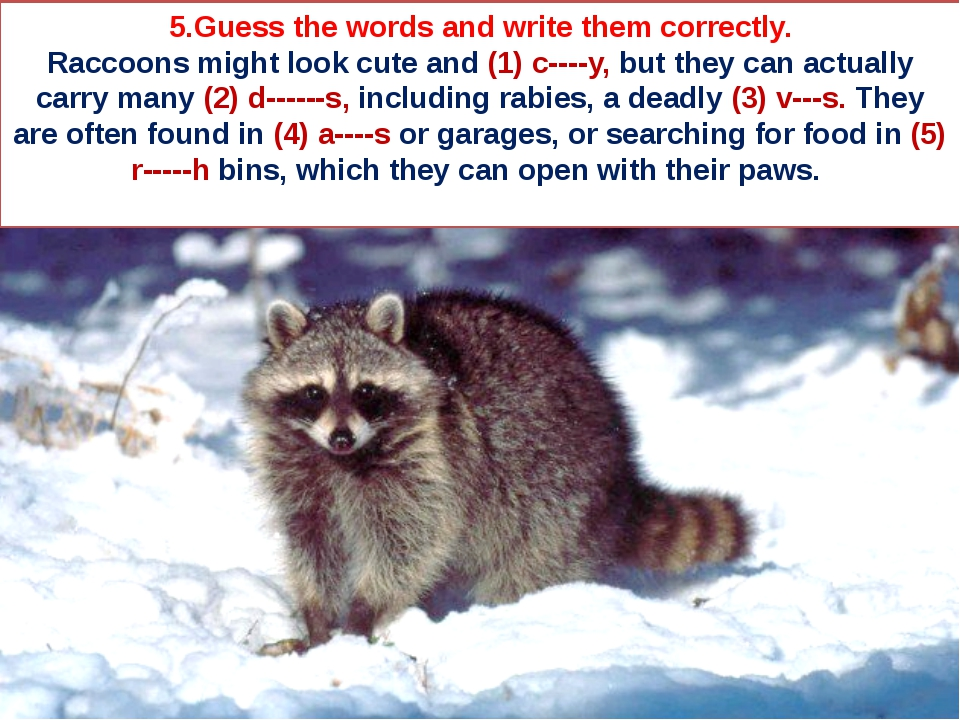 5.Guess the words and write them correctly. Raccoons might look cute and (1)...