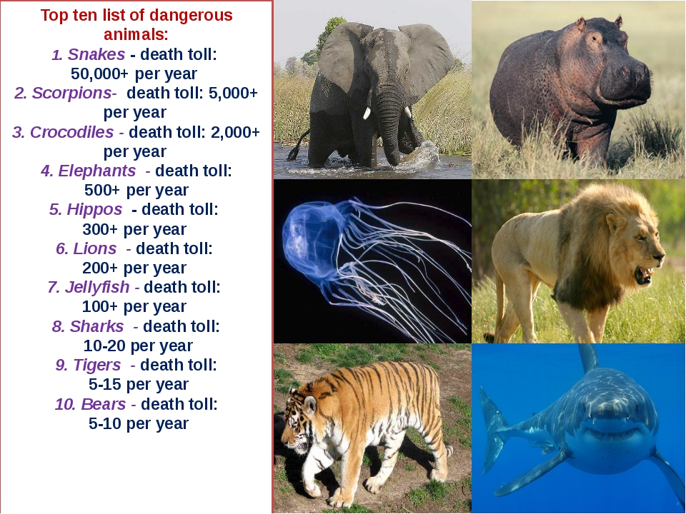 Top ten list of dangerous animals: 1. Snakes - death toll: 50,000+ per year 2...