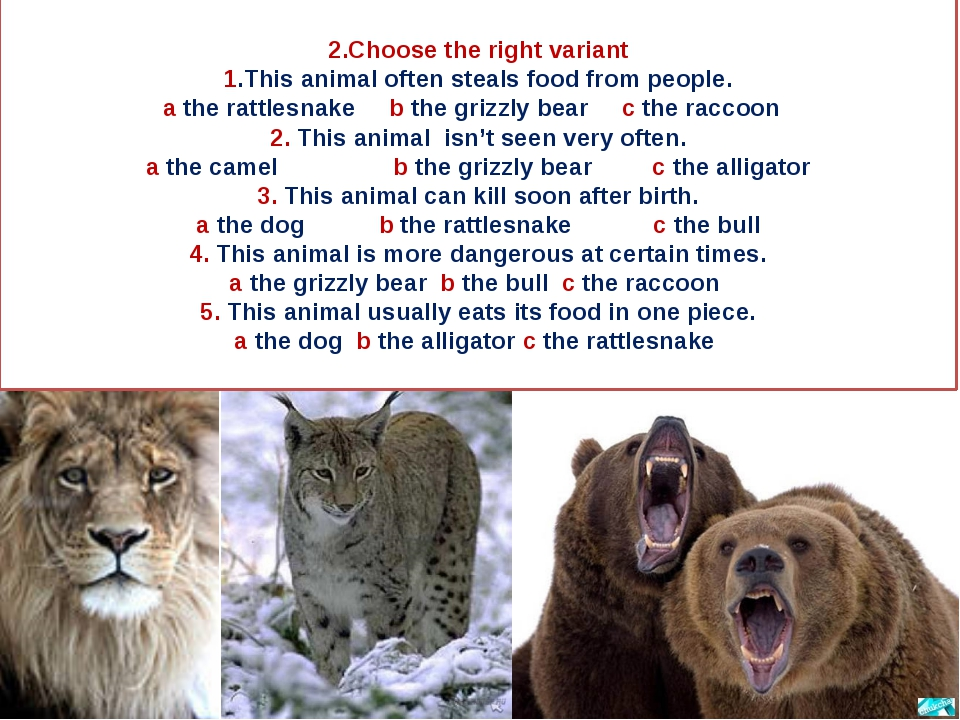 2.Сhoose the right variant 1.This animal often steals food from people. a th...