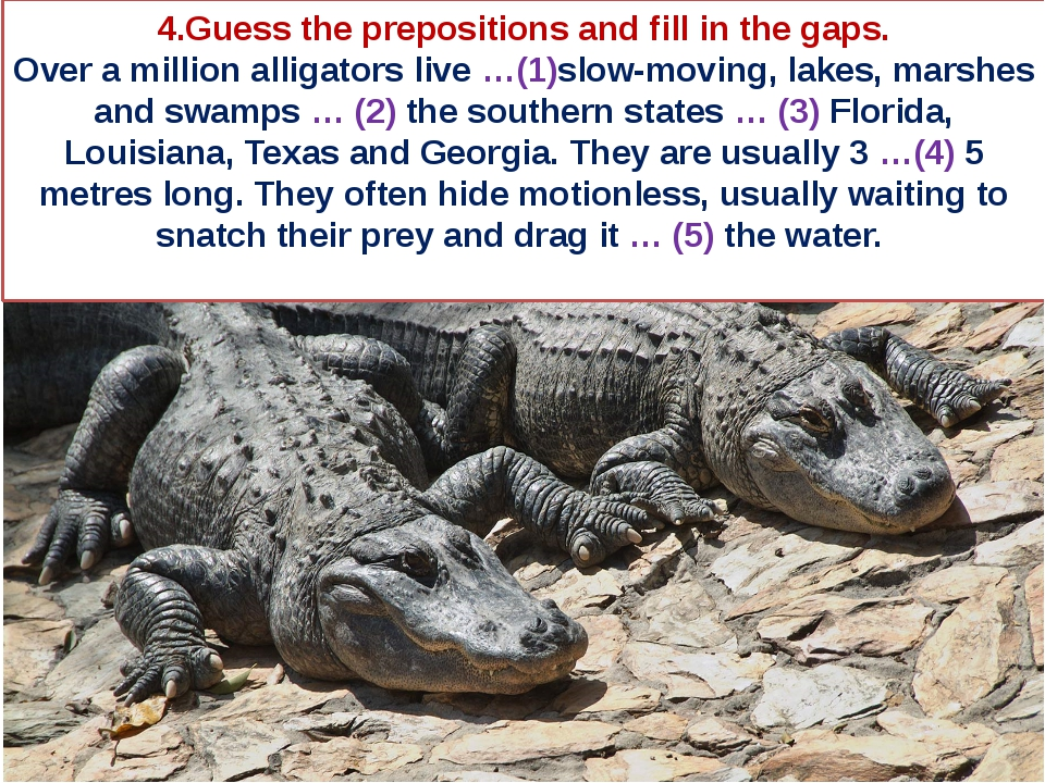 4.Guess the prepositions and fill in the gaps. Over a million alligators live...