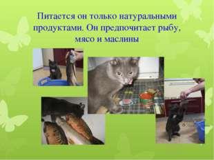 Питается он только натуральными продуктами. Он предпочитает рыбу, мясо и масл