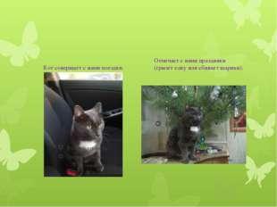 Кот совершает с нами поездки. Отмечает с нами праздники (грызет елку или сби