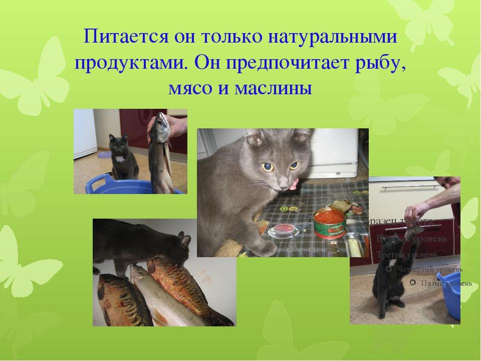 Питается он только натуральными продуктами. Он предпочитает рыбу, мясо и масл...