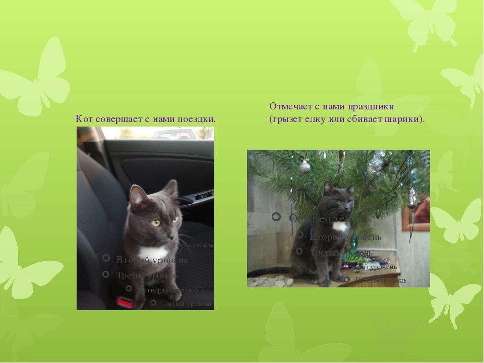 Кот совершает с нами поездки. Отмечает с нами праздники (грызет елку или сби...