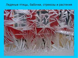 Ледяные птицы, бабочки, стрекозы и растения