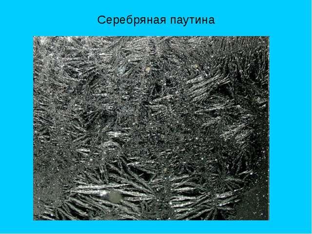 Серебряная паутина