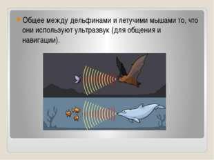 Общее между дельфинами и летучими мышами то, что они используют ультразвук (д
