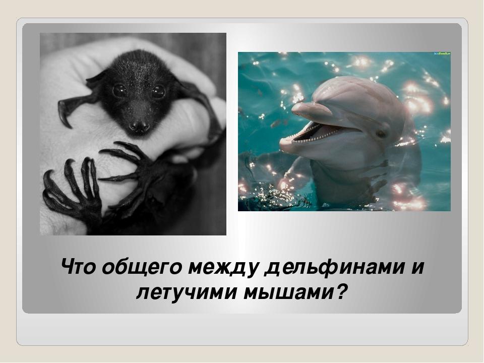 Что общего между дельфинами и летучими мышами?