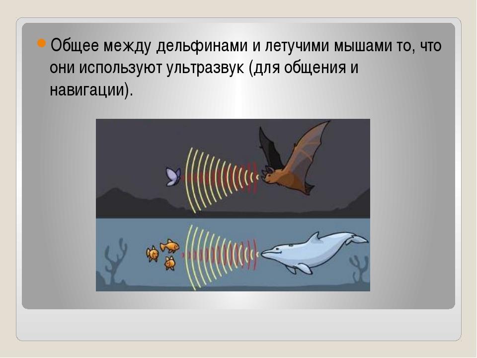 Общее между дельфинами и летучими мышами то, что они используют ультразвук (д...